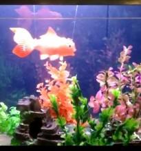 prop aquarium fish